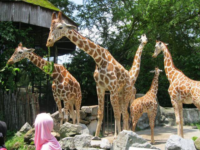Zoo-Negara-National-Zoo
