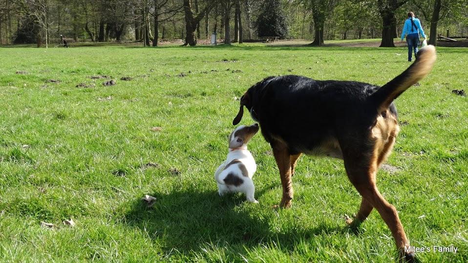 Balades canines en Nord (59)/Pas de Calais (62) - Boulogne-sur-Mer, Calais et Lille - Page 4 DSC01813