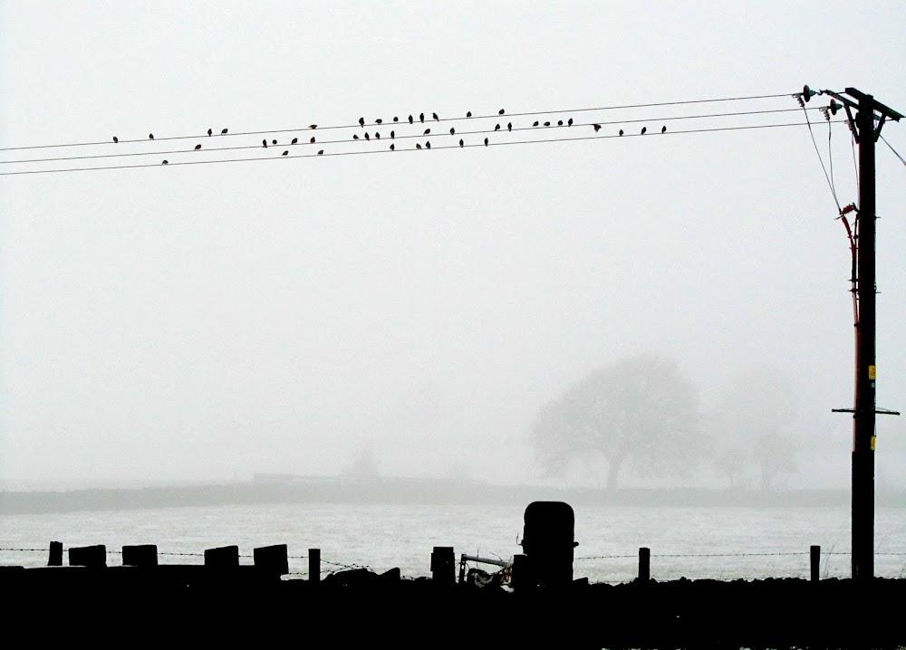 February birds. Hay gaitistas que usan pautas de 3 líneas.