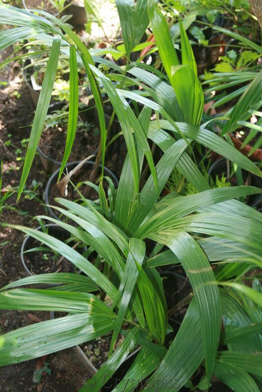 Futur jardin d'orchidées!!! - Page 2 IMG_3688