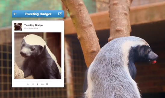 Johannesburg Zoo's Tweeting Honey Badger A World First