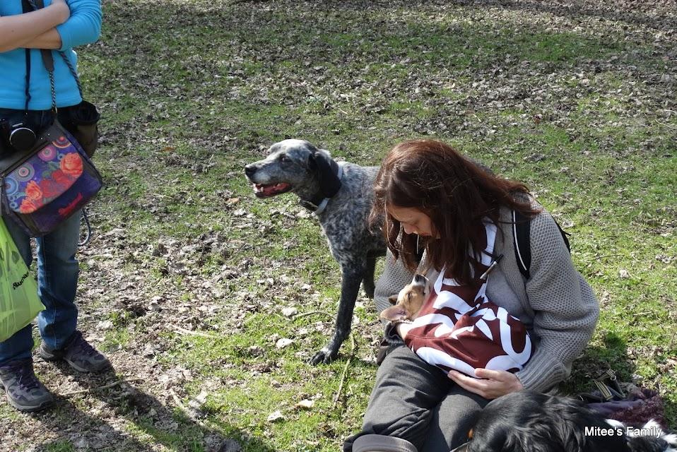 Balades canines en Nord (59)/Pas de Calais (62) - Boulogne-sur-Mer, Calais et Lille - Page 4 DSC01901-001