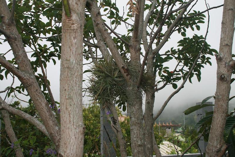 Futur jardin d'orchidées!!! IMG_3546