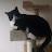 Isaac Rabinovitch avatar image