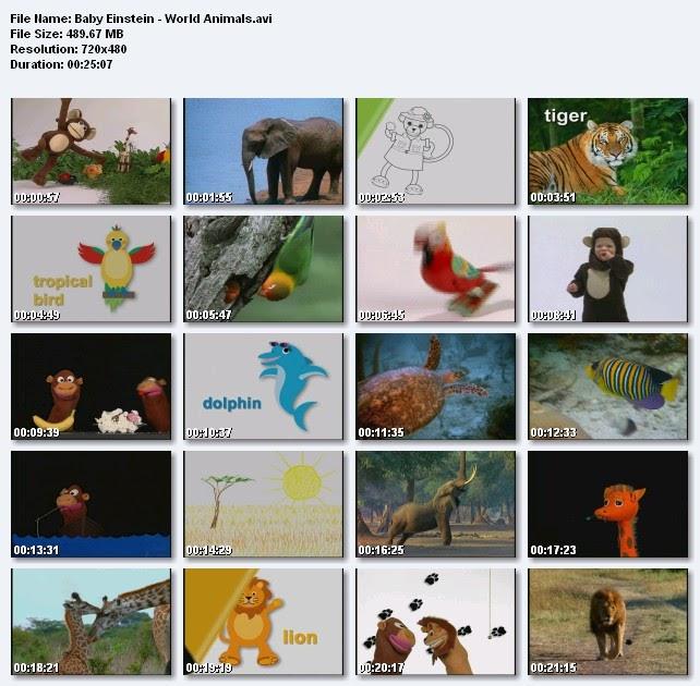 11 Dvd 11 Baby World Animals Thế Giới động Vật S 244 Ng Lam