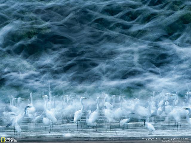 #2013 國家地理攝影大賽:來看看令人驚豔的得奬作品!! 3