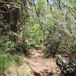 Following the Casuarina Track (131551)
