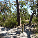 Int of Great North Walk and Currawong Road track (352955)