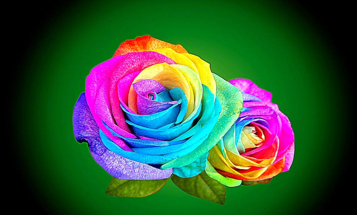 Abstract Rose Wallpaper Wallpaper 3d Rainbow Roses hd