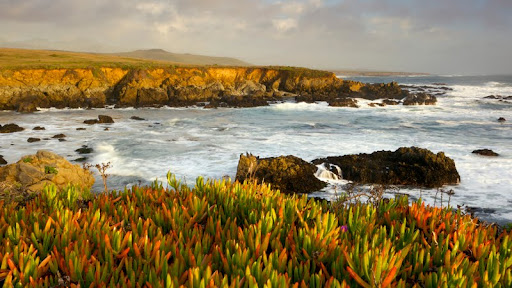 Ice Plant, Piedras Blancas, Big Sur, California.jpg