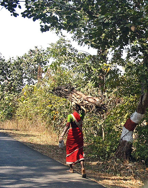 woman carrying firewood on country road