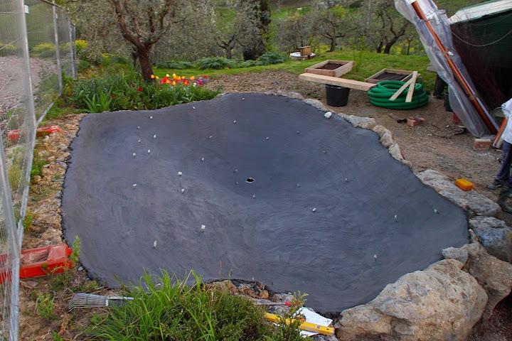 Laghetto piante palustri autoctone for Costruire laghetto in cemento