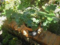 El jardin de pepa arboles de pepa for Arboles de jardin de hoja caduca