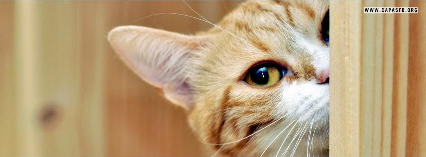 Capas para Facebook Gato Espiando