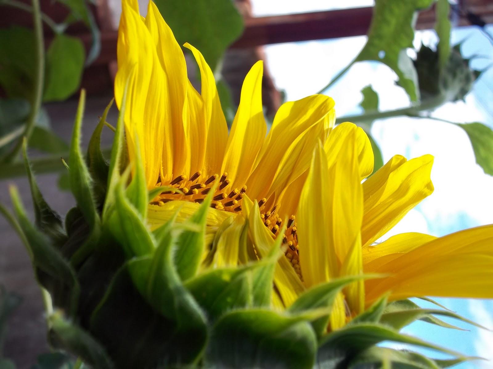 Os Poderosos Podem Matar Uma Duas Ou Três Rosas Mas Jamais Conseguirão Deter A Primavera Inteira: Dom Bosco Através Do Meu Olhar Digital: O Encanto E A
