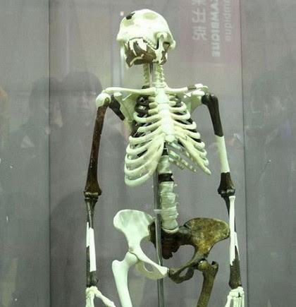 人類祖先露西3