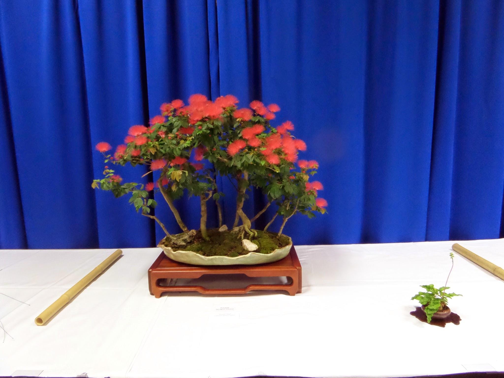 Saruyama Blog