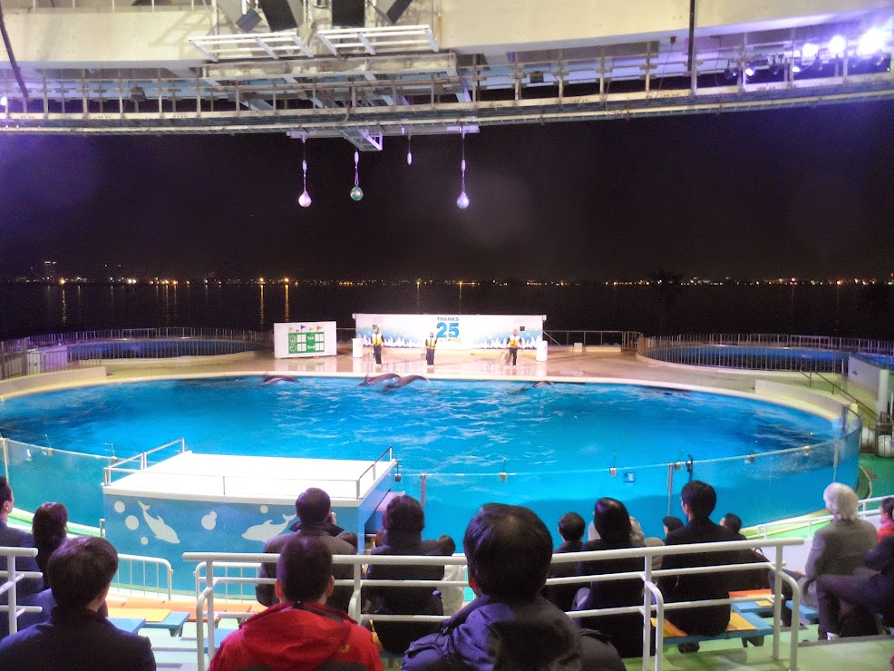 Swimming pool with dolphins