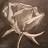 Phantasm - Jasmine avatar image