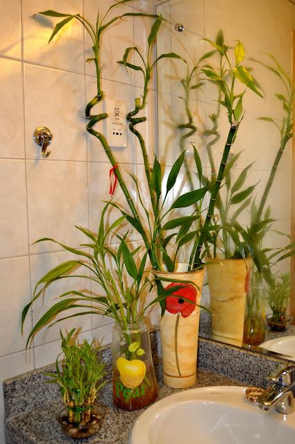Plants For Bathroom Kero 39 S Celebration