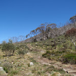 Thredbo River Track (83623)