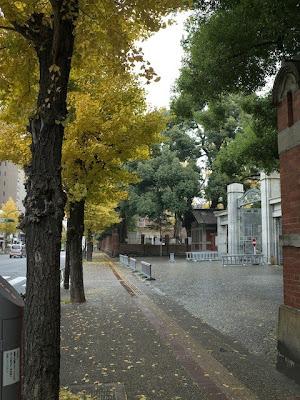 東大正門前の銀杏並木