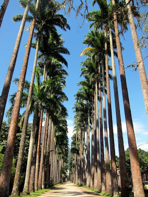 Palm tree avenue at the botanical garden in Rio de Janeiro Brazil