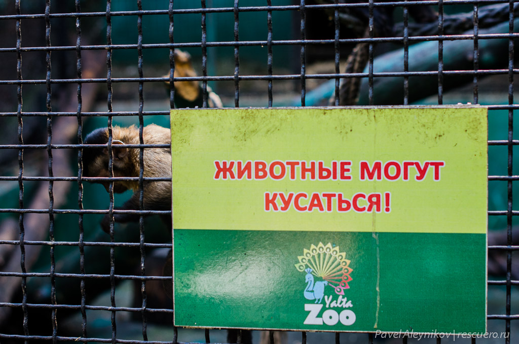 Осторожно, животные кусаются
