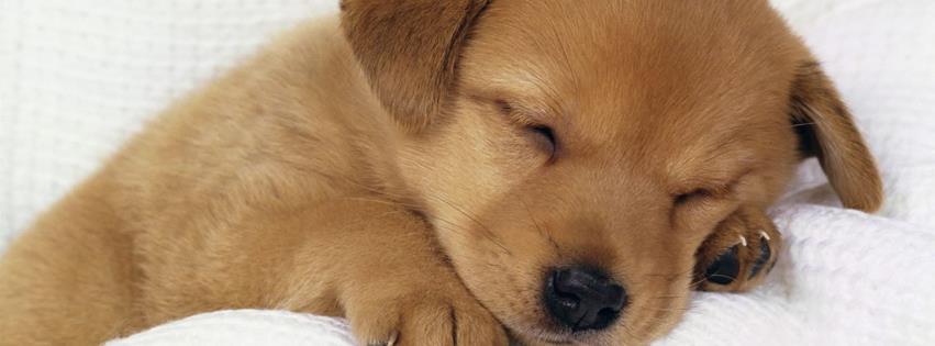 Uyuyan yavru köpek facebook kapak fotoğrafı