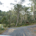 Clover Flat camping area drive way