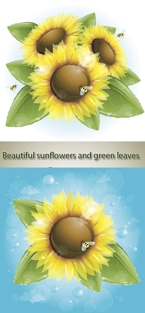 Stock: Beautiful sunflowers and green leaves