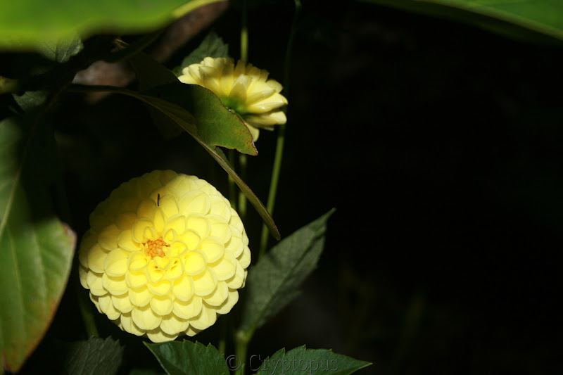 Futur jardin d'orchidées!!! IMG_3633