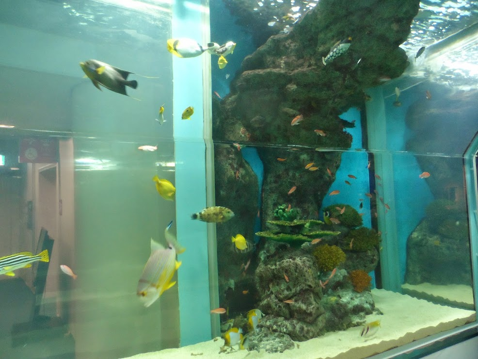 yellow-gray fishes in the aquarium