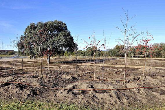 Nueva área recreativa botánica en una zona verde de Sevilla la Nueva