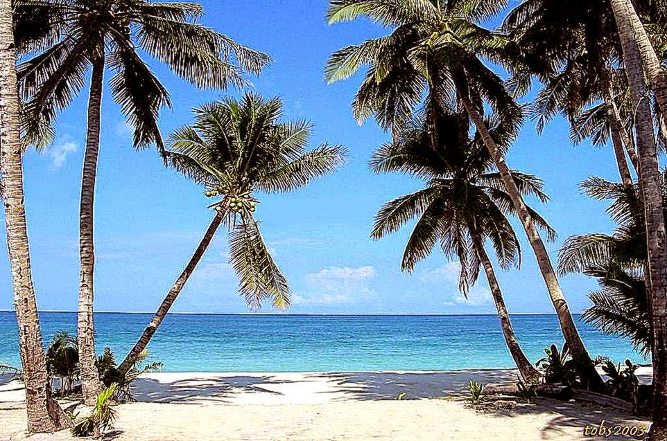 Beautiful Beach Backgrounds Palm Trees Palm Tree Palm Trees Beach
