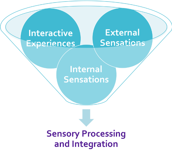 A funnel containing three balls labeled interactive experiences, external sensations, and internal sensations with a downward pointing arrow below the funnel pointing to text labeled Sensory Processing and Integration.