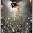 nigerianflower avatar image