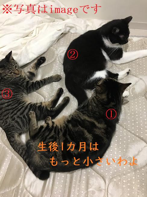 仔猫が飼い主を母親だと認識する?出産後、家に帰宅した後の猫の反応が・・
