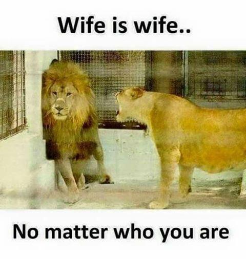 D:\WIFE.jpg