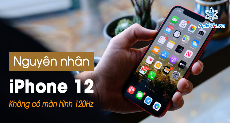 iPhone 12 khong co man hinh 120Hz nhu loi don