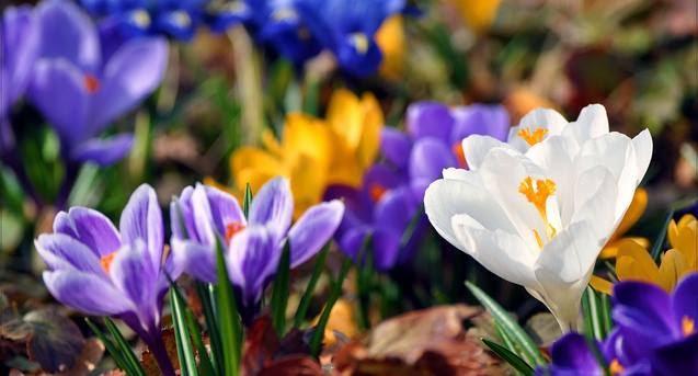 Весенний день в саду @ Ботанический сад Одесского национального университета, Odessa [с 21 по 22 апреля]