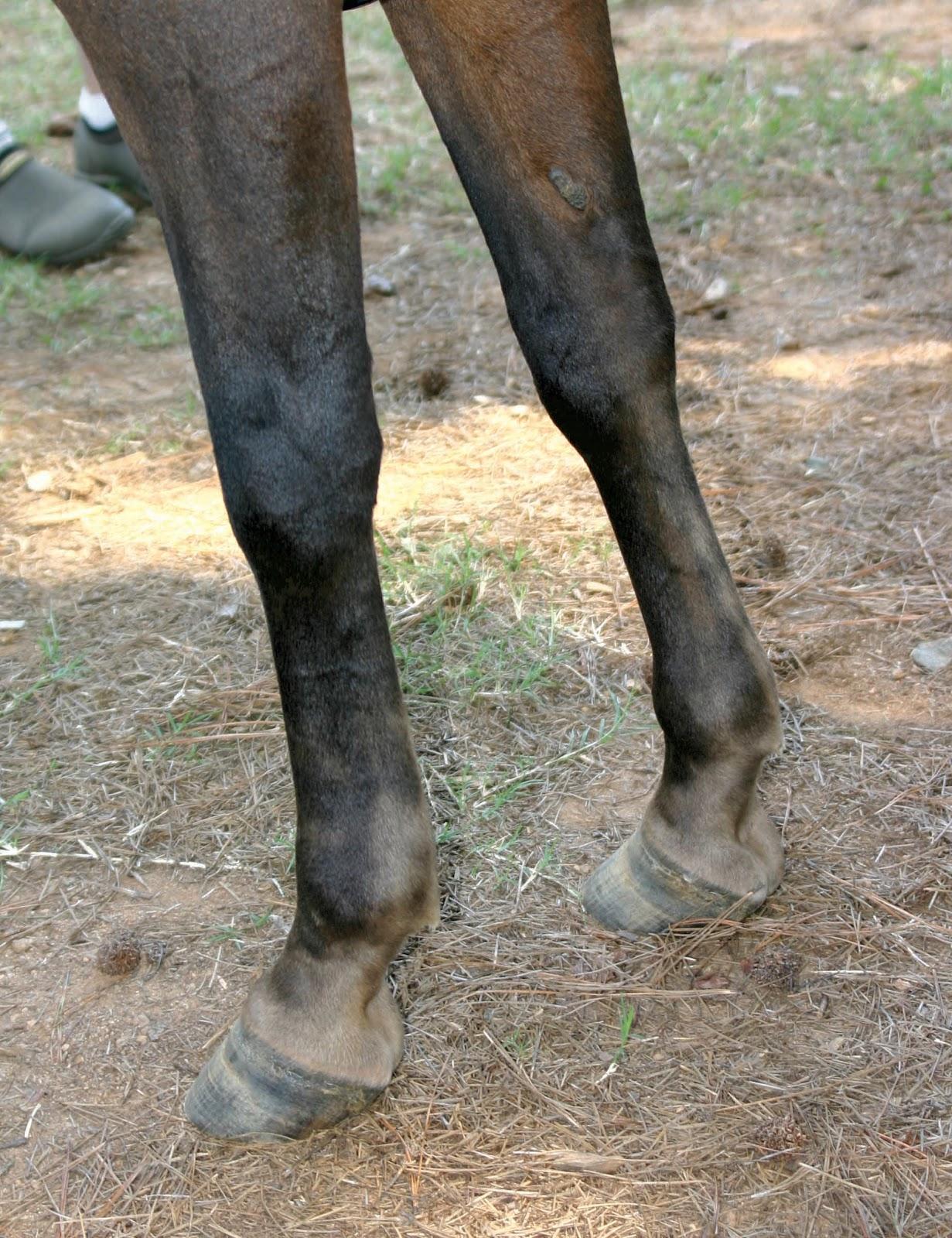 bay silver legs.jpg