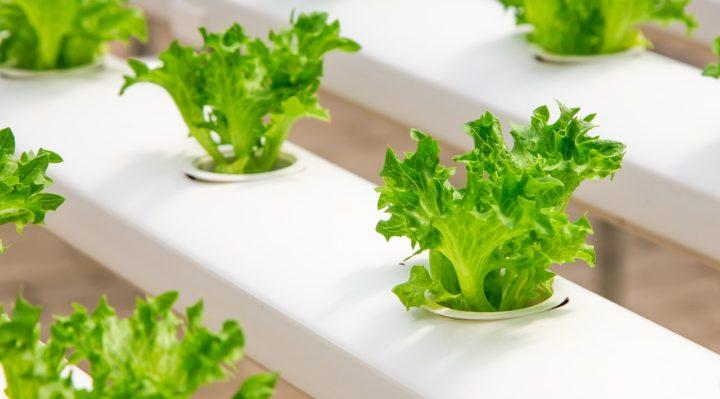 Learn About Online Canadian Hydroponics Store Wholesale Hydroponic Supplies  |