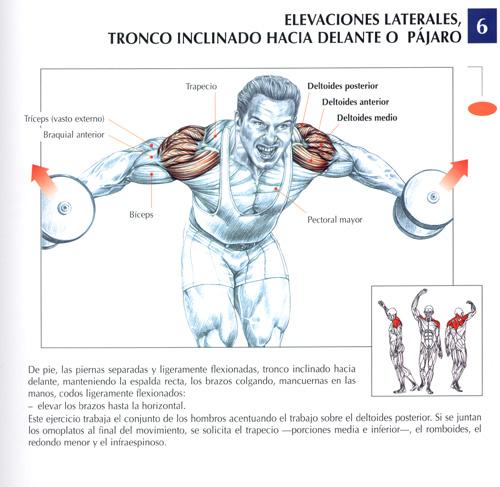 ejercicios de trapecio gym