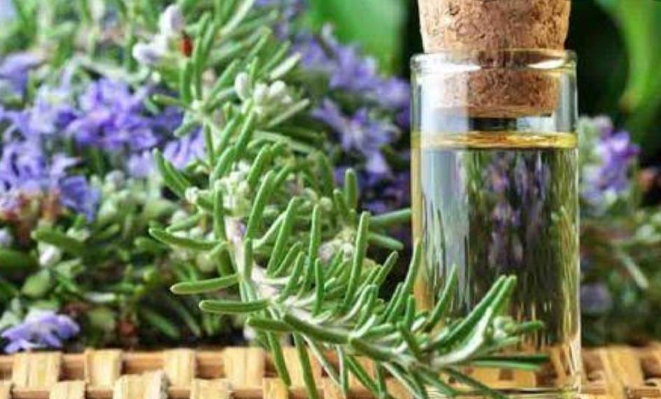 Rosemary Oil For Hair