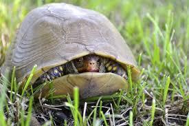 """Turtle Wisdom."""" – """"Just Another BlaH BlaH BlaH BloG."""""""