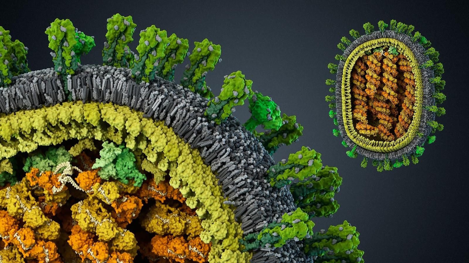 Вирус Гриппа A/H1N1
