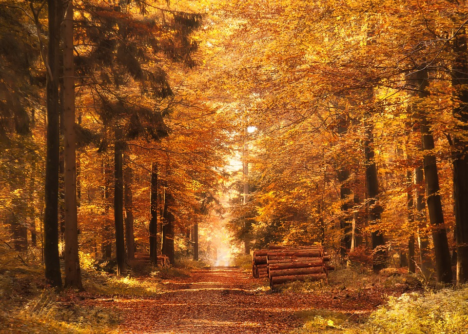 Free photo: Forest Path, Autumn, Fall Leaves - Free Image on ...