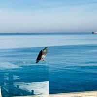 Η εικόνα ίσως περιέχει: ωκεανός, ουρανός, υπαίθριες δραστηριότητες και νερό
