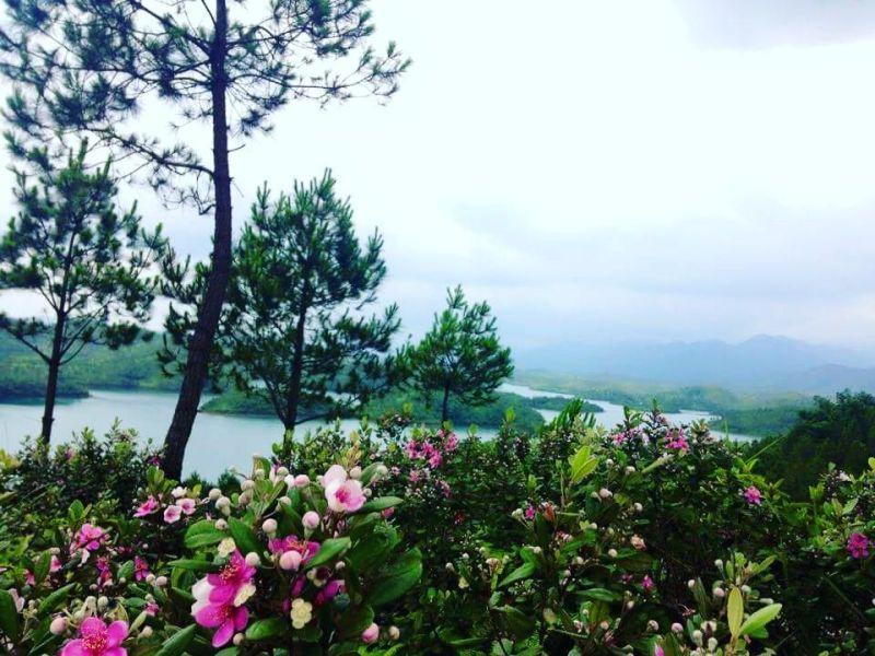 Lưu giữ những bức ảnh tuyệt đẹp từ đồi sim tím khi du lịch đảo Cô Tô